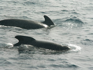 Tarifa Dolphins